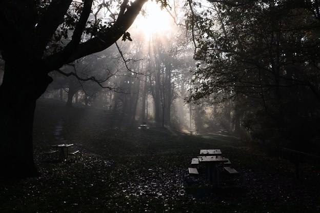 The Morning of Blue Ridge Parkway II 10-14-17