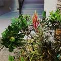 写真: Air Plants 9-2-17