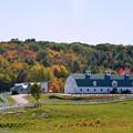 写真: The Autumn in Pineland 10-17-17
