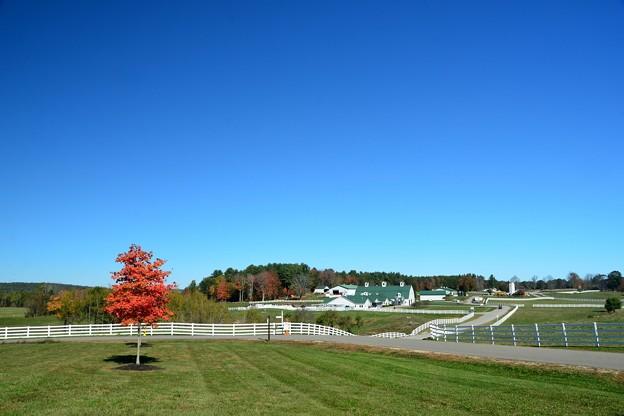 Pineland I 10-17-17