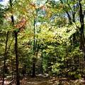 写真: Hiking Again 10-17-17