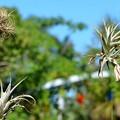 写真: Air Plants Curtain 12-3-17