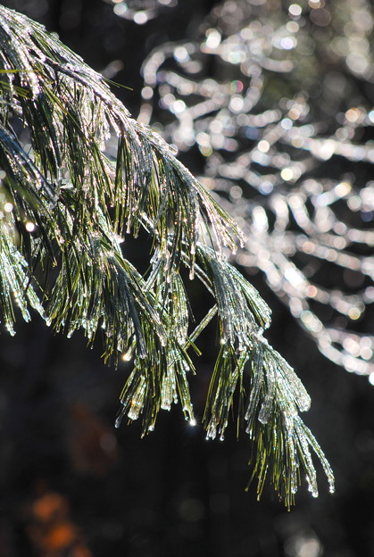 写真: Morning After Ice Storm 12-13-09