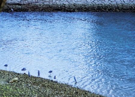 雨水の日の岡山城側の旭川