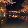 Photos: 逆さモミジ