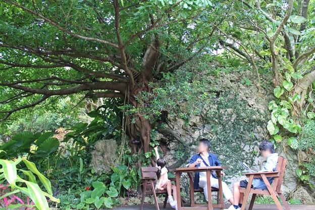 山の茶屋楽水の庭園