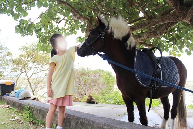 山の茶屋楽水の前の馬
