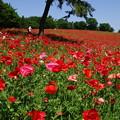 写真: 赤い世界は夏の始まり