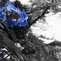 紫陽花に癒された日