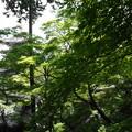 写真: 緑の季節に包まれてみました