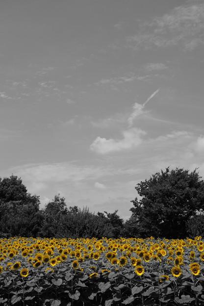 写真: 名残惜しい黄色