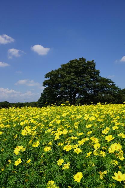 黄色い野原に雲がポッ