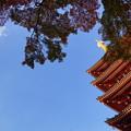 写真: 秋の空を眺めて見た時、何を思う