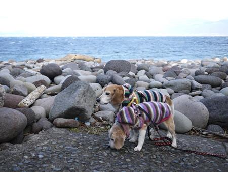もぉーさ~、風強い中立たせるのって、すっごく寒いんだよ~