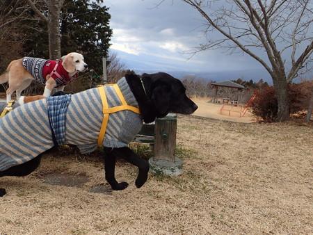 でも、みてみてー!このセーター手編みなんだよー!ボクにぴったりでしょー!