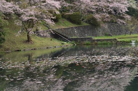 ここは睡蓮も見事に咲く公園です