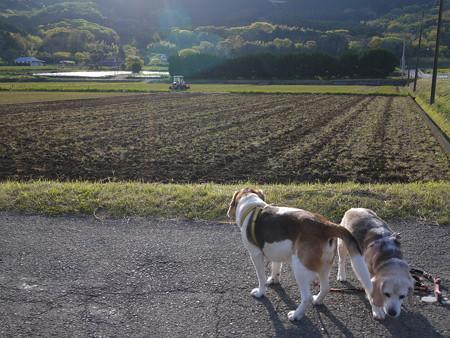 整地完了。そろそろ水田になりそうですね@ビーグルがいる南箱根の景色