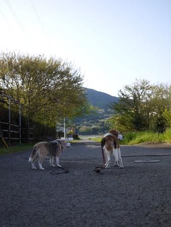 今日はいっぱい写真とるね@ビーグルがいる南箱根の景色