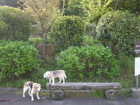 女王様と下僕@ビーグルがいる南箱根の景色