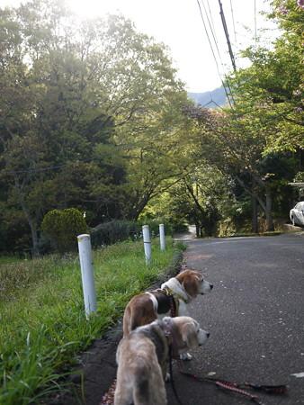 この道でよく写真撮ります@ビーグルがいる南箱根の景色