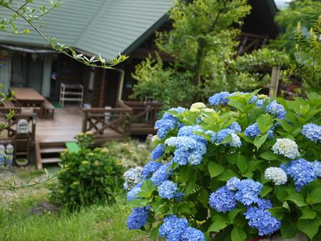紫陽花と我が家