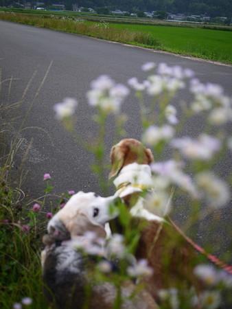 お花とマリンとギョロ見うみちゃん