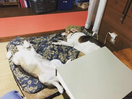 こうも違う夫婦の寝方
