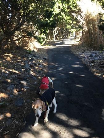 神池の周りの遊歩道を歩いてまっす