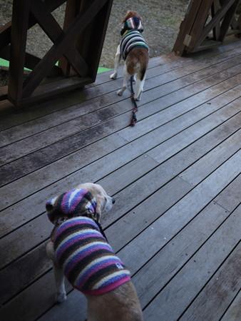 さーて、朝のお散歩しましょうか!