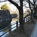 Photos: 小田原城13