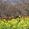 二宮町吾妻山公園40