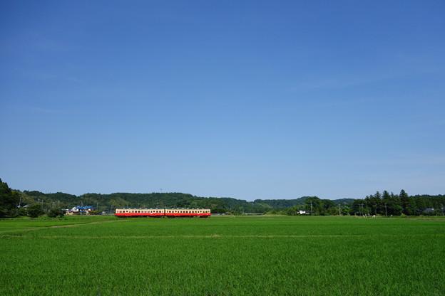 写真: 田んぼの中を行く