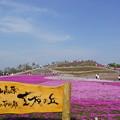 芝桜の丘1