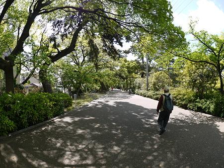 川沿いの歩道