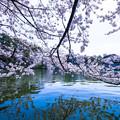 写真: The Japan
