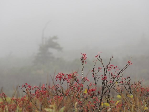 写真: 霧降る丘