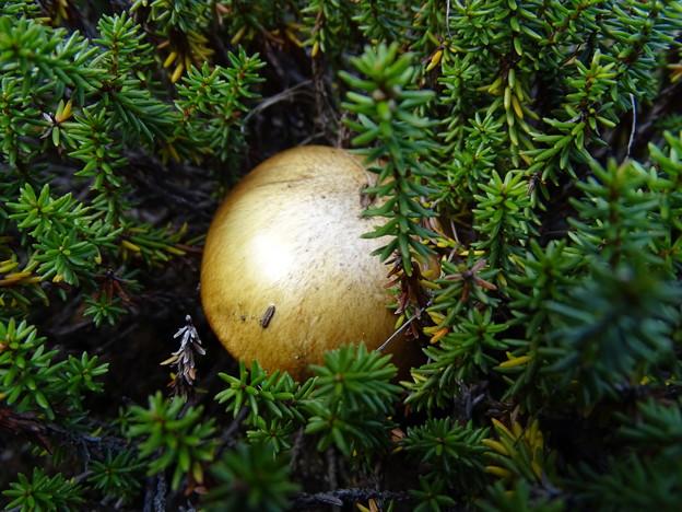 Photos: ゴールド ボール