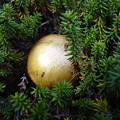 写真: ゴールド ボール