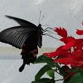 写真: 蝶の季節