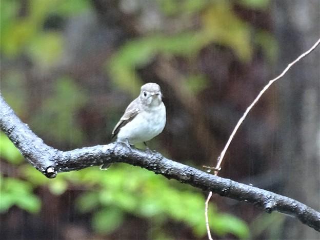 写真: 雨に濡れながら佇む鳥が・・・