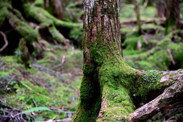 Photos: 白駒池の自然の中で