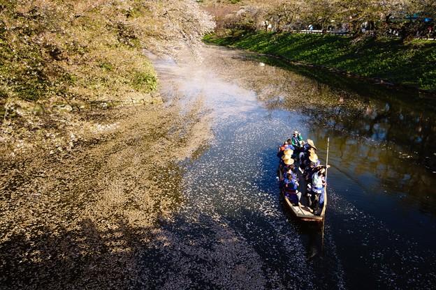 Photos: 桜の河