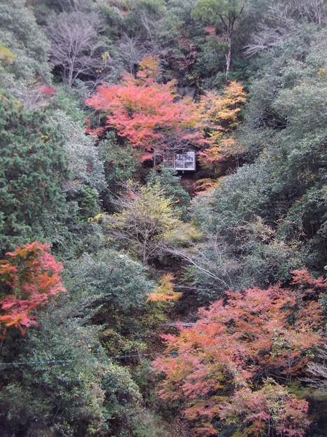 一宇 岩戸の紅葉