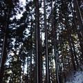 写真: 雪の線