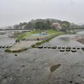 Photos: 2017_0408_150310 雨の鴨川デルタ
