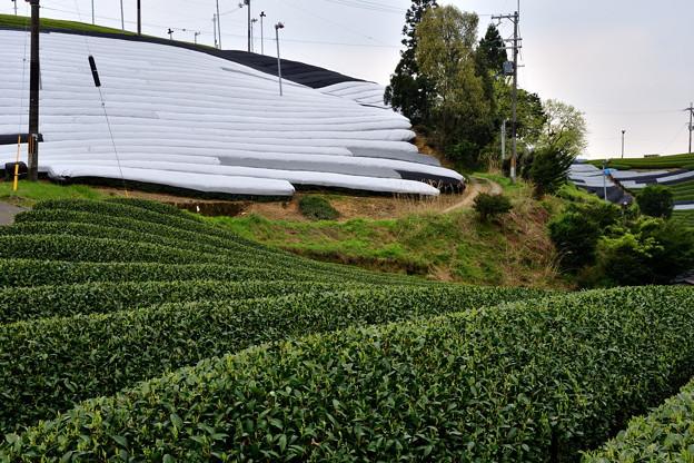 2017_0501_135514 宇治田原のお茶畑