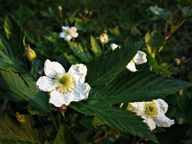写真: 白花