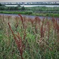 写真: 荒川放水路