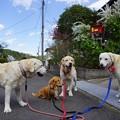 写真: 狂犬病予防注射 終了