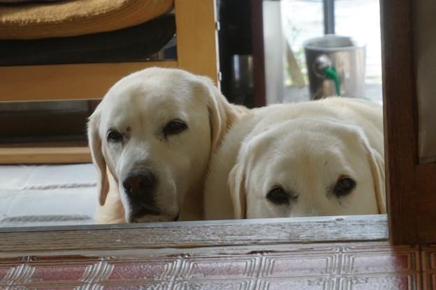 写真: くん子とふう太